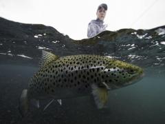 Brown trout fishing in iceland, Lake thingvellir