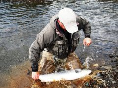 fossa-salmon