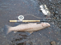 88 cm sea trout, Iceland, fly fishing