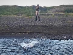 sea-trout-..