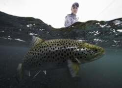 Lake Thingvellir,trout fishing in Iceland
