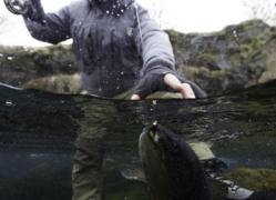 Lake Thingvellir,trout fishing in Iceland