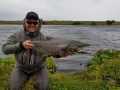 Nice-trophy-salmon-in-Iceland-5