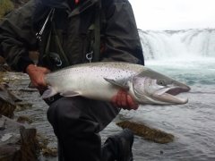 West Ranga salmon fishing