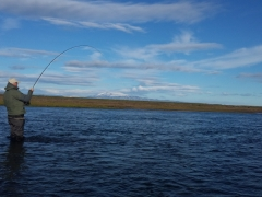 West Ranga salmon fishing, fish on!