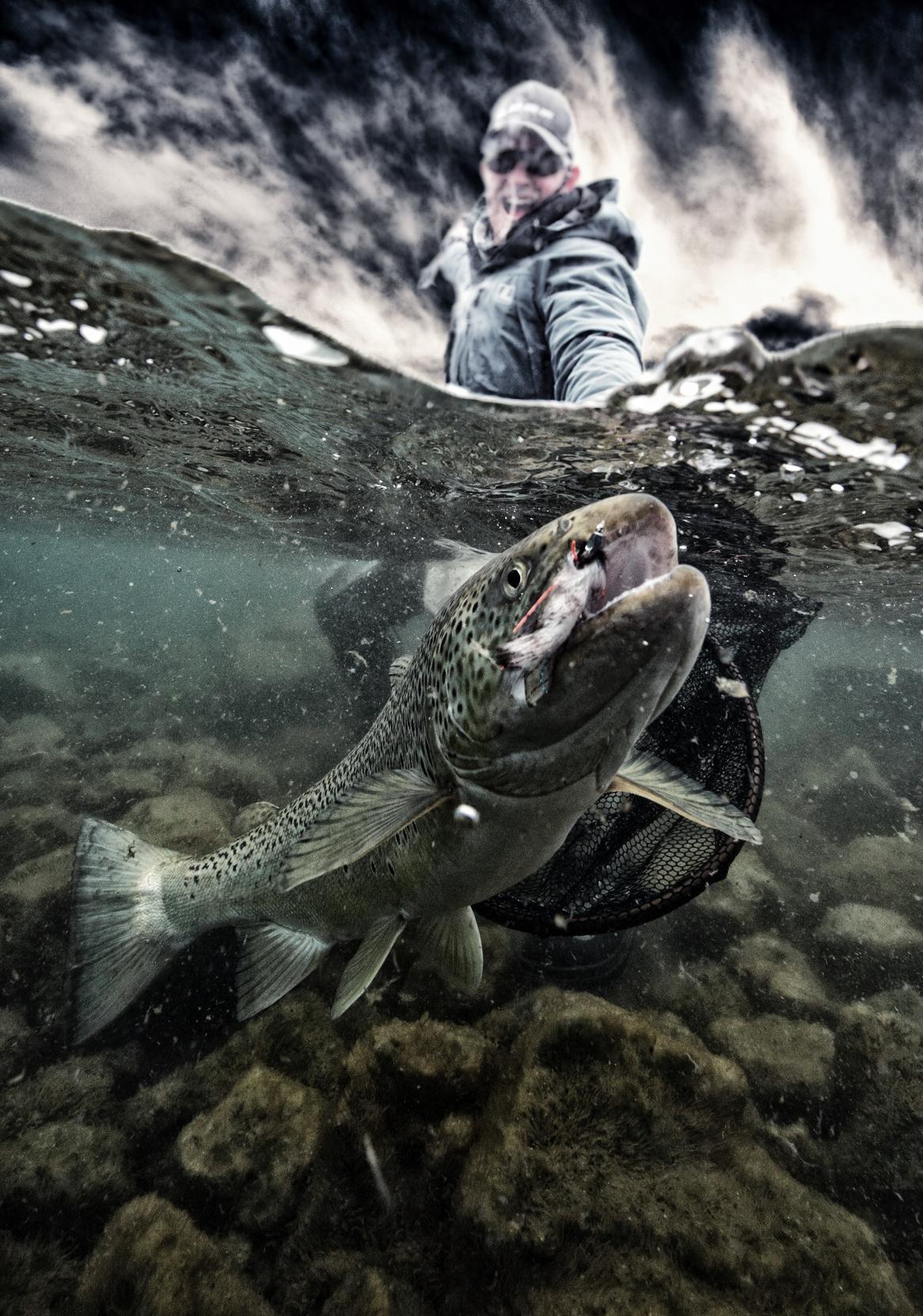 Lake-Þingvellir-trout