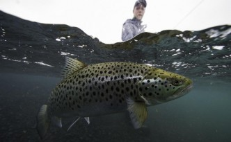 Lake thingvellir,Iceland trout fishing