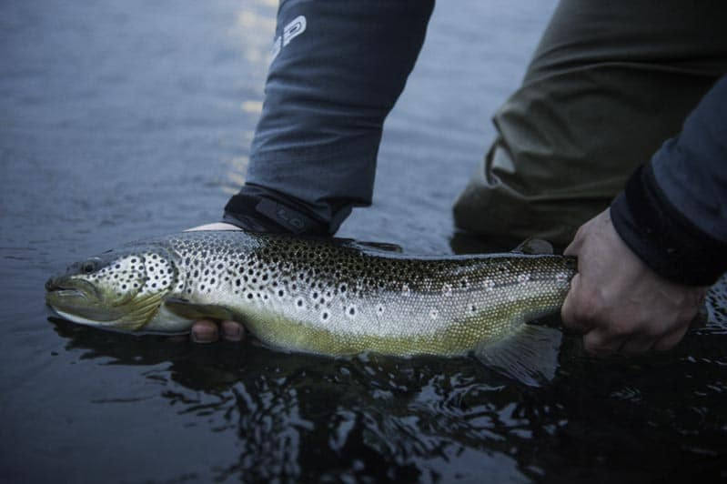River Varmá-fishing in Iceland-fishing-angling-trout