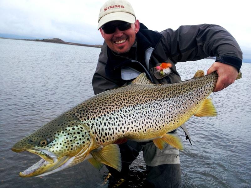 Lale Thingvellir, trout