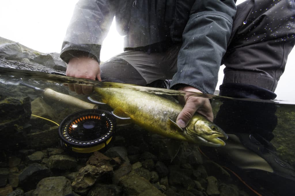 Arctic Char, Iceland, Fishing, river Hólala, fly fishing