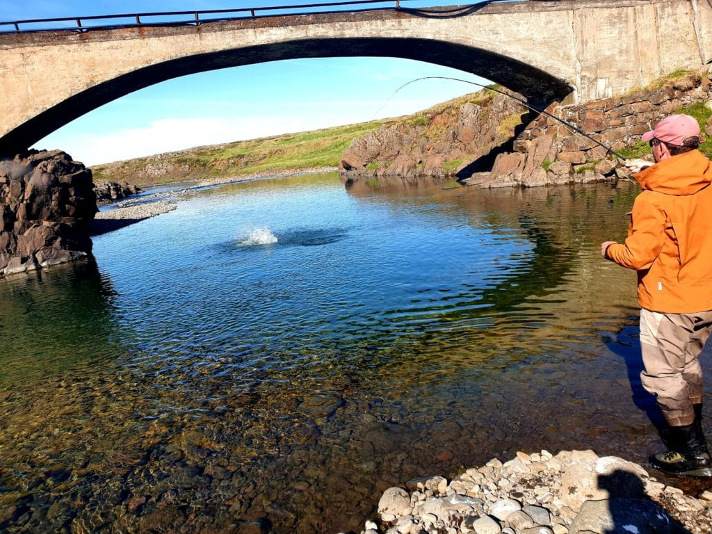River Haukadalsá-salmon, fishing, Iceland, fly fishing, Atlantic salmon, iceland fishing-River-Haukadalsá-salmon-fishing-in-Iceland